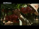 CCTV - Видео блог на русском языке - Путешествия в Китай - Цикл «Остров сокровищ в Южно-китайском море» («Любимая река Ваньцюань